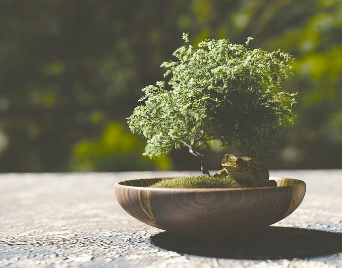 bonsai düngen