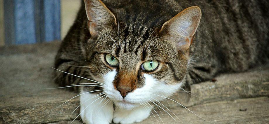 was tun gegen katzen im garten