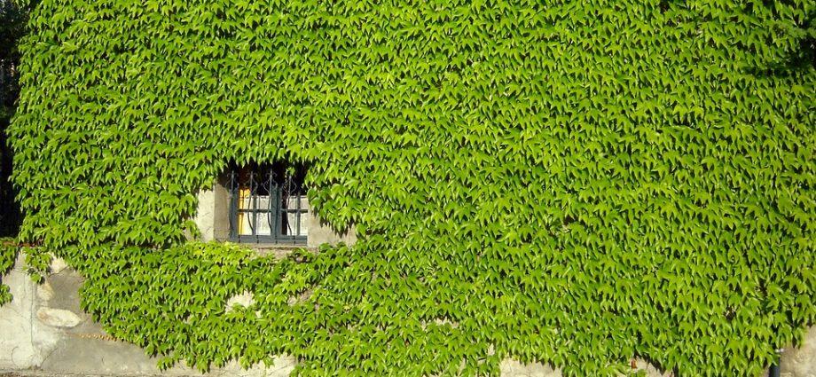 Ideen für Sichtschutz im Garten – garten247.de