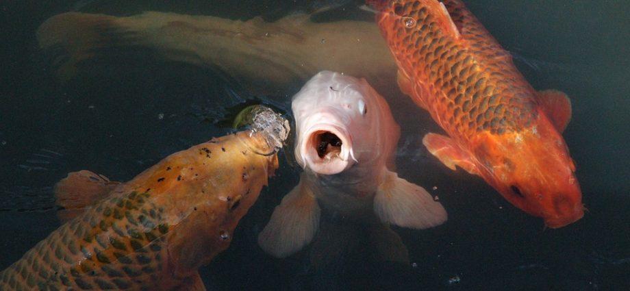 fischsäule teich