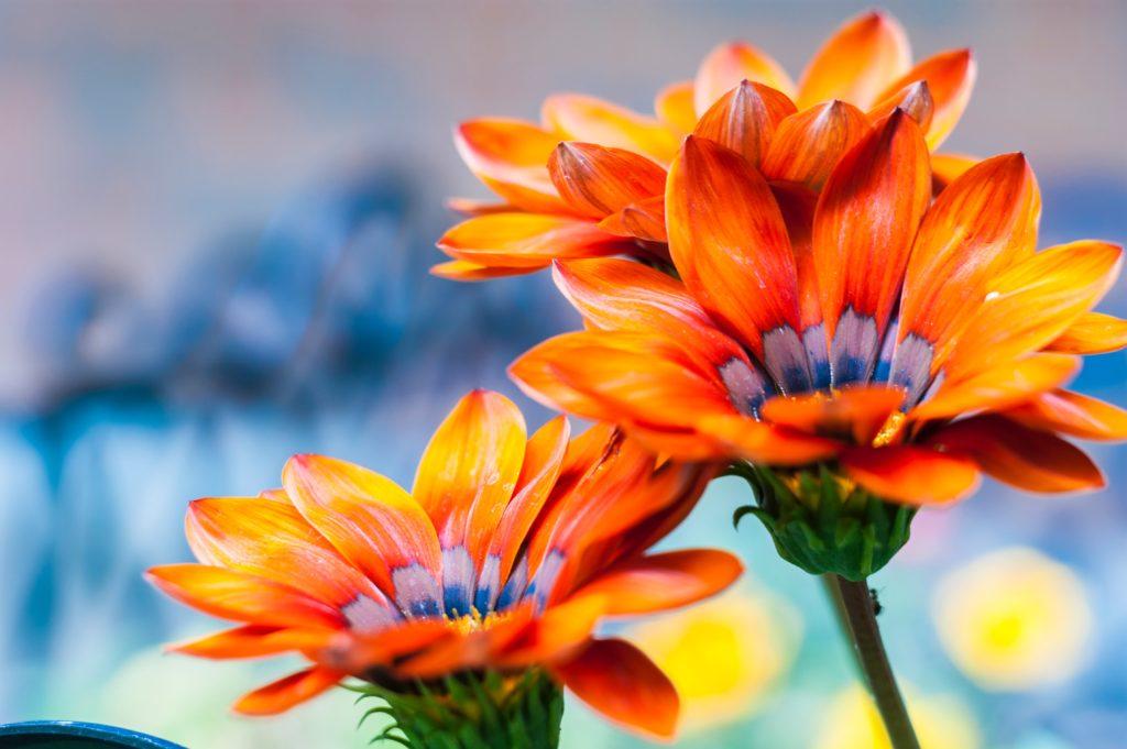 garten pflanzen wohlfühlen