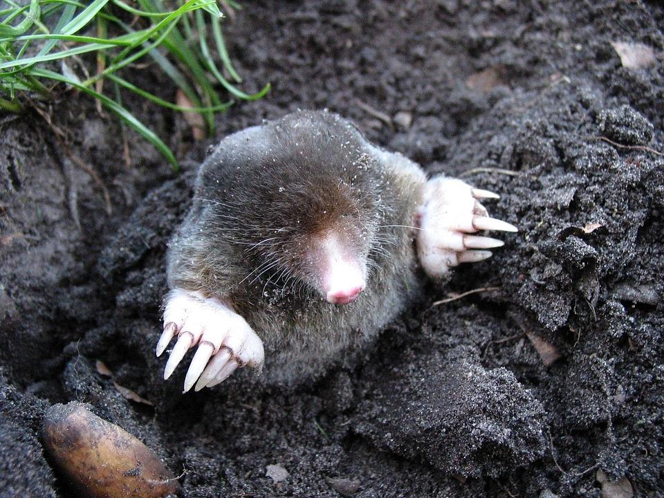 Solar Vibration Falle Tiervertreiber gegen Maulwürfe Mäuse Ameisen Wühltiere
